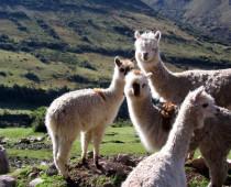 Beelden van Peru